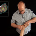 Nerve mobilization for the foot