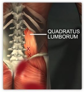 Quadratus Lumborum muscles