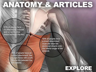 anatomy articles