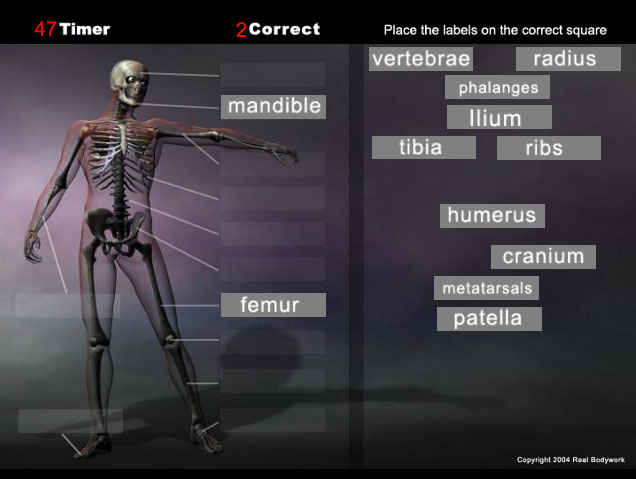 Anatomy bones game