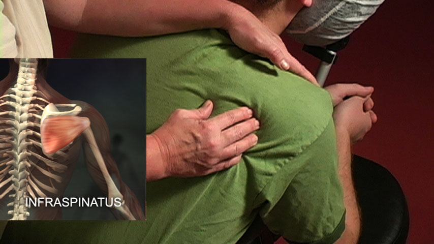 Screenshot From The Chair Massage With Diana Haynes Infraspinatus Muscle