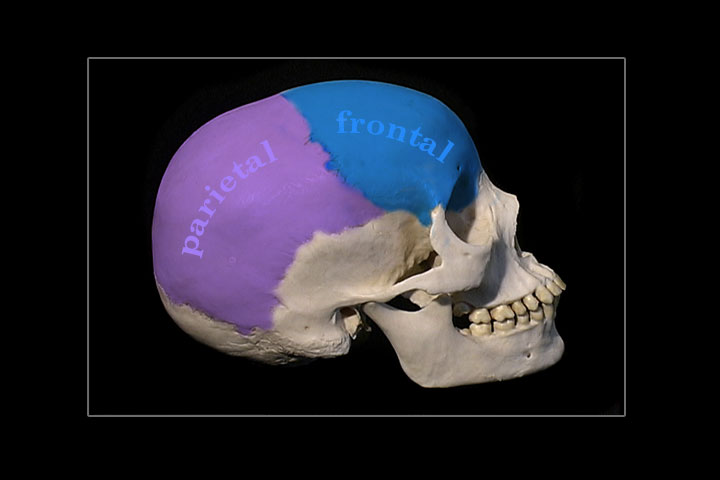 Cranial Sacral Therapy - Real Bodywork