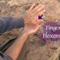 Finger flexor strength test