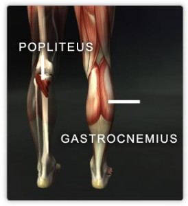 Popliteus and gastrocnemius muscles