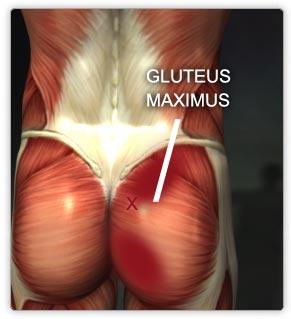 Muscles Lower Body Real Bodywork