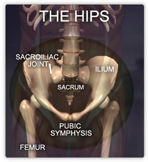Muscles of the Hips