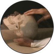 image of cranium with hand touching frontal bone