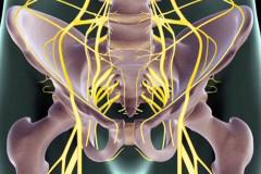 Sciatic nerve pelvic anterior