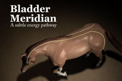 bladder-meridian