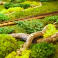 2-moss-art-close-up