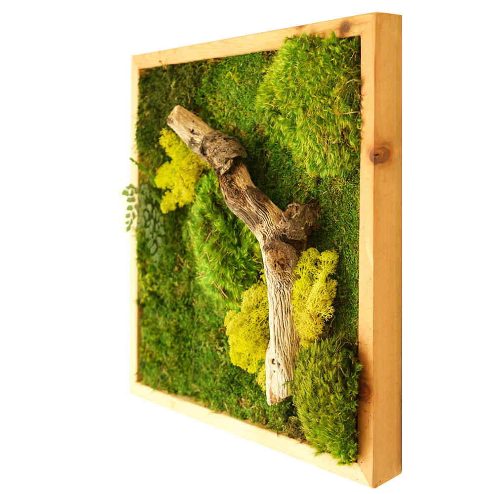 18x18 moss wall art light frame real bodywork. Black Bedroom Furniture Sets. Home Design Ideas