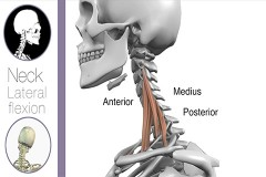 neck-lateral-flexion