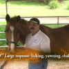 Horse Massage video