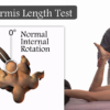Piriformis length test