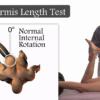 Piriformis length test