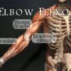 elbow extensor muscles