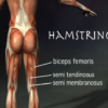 Hamstring muscle image