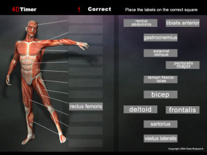 play this anatomy game for the muscles and quickly learn the names.