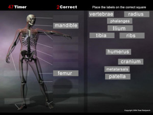 Play this anatomy game for the skeleton and quickly learn the bone names