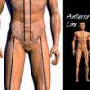 Anterior fascial line