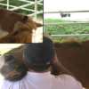 Equine Massage on the occiput