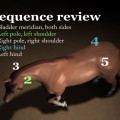 Horse Massage Sequence review