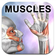 Learn Muscles: Anatomy Quiz and Reference