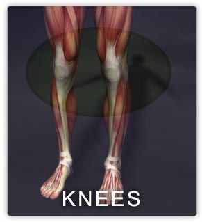 Knee muscles