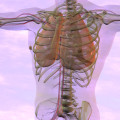 lungs and body for massage therapists