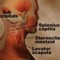 Anatomy video screenshot neck muscles
