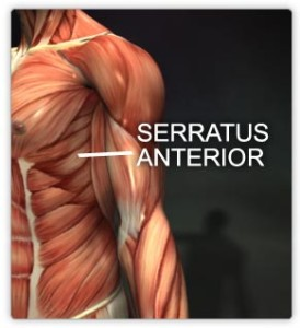 Serratus Anterior Muscle