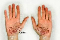 organ-reflex