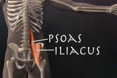 Psoas muscle release