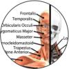 anatomy-online-class
