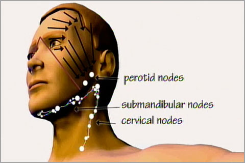 Lesson 2  Lymph nodes and drainage patterns - Real Bodywork