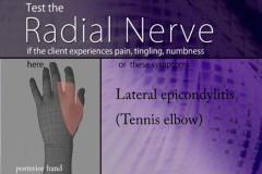 radial nerve chart.