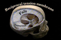 tension-membrane