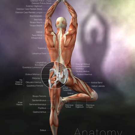 Yoga Anatomy tree pose poster
