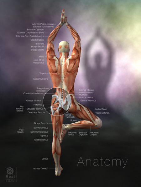 Yoga Anatomy tree pose poster