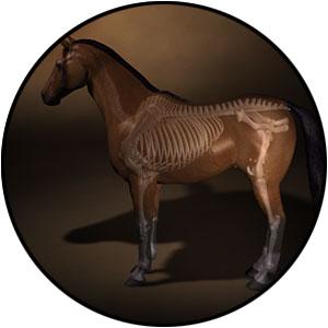 horse-massage-class