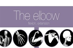 elbow- intro