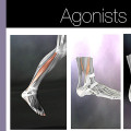 structural-massage-agonists
